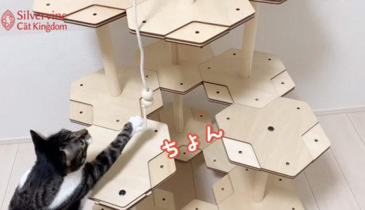 2020.09 にゃんこタワー公式Youtubeチャンネル「猫様とにゃんこタワー」を公開