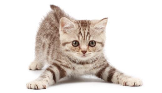 【子猫向け】ケージの中にキャットタワーを建てる必要性について