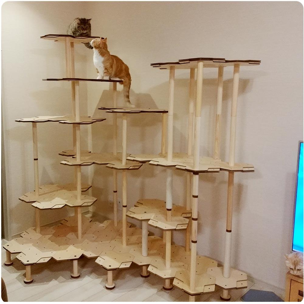 にゃんこタワーをお使いの猫さん